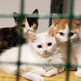 Kissakesälle katastrofaalinen päätös Lammilla ja Tuuloksessa