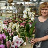 Kukkakauppa jatkaa entisin kujein