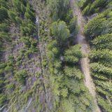 Metsäopetuksen avoimet ovet Evolla