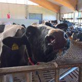Pakaraisen tilalla nähtiin livenä miten maito menee tankkiin