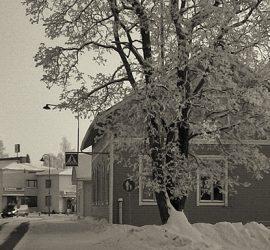 Peltolehto. Kuva on osasuurennos Matti Siivosen valokuvasta.
