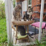 Koirat pidettävä kytkettynä, kissat mieluiten tarhassa