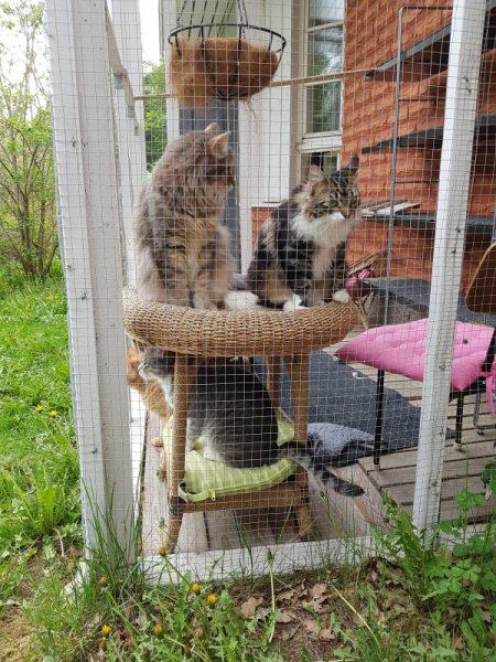 Kissat viihtyvät kissatarhassa.
