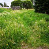 Puistojen hoitamattomuus harmittaa lammilaisia