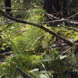 Voimaannuttava luonto valokuvina Lammilla