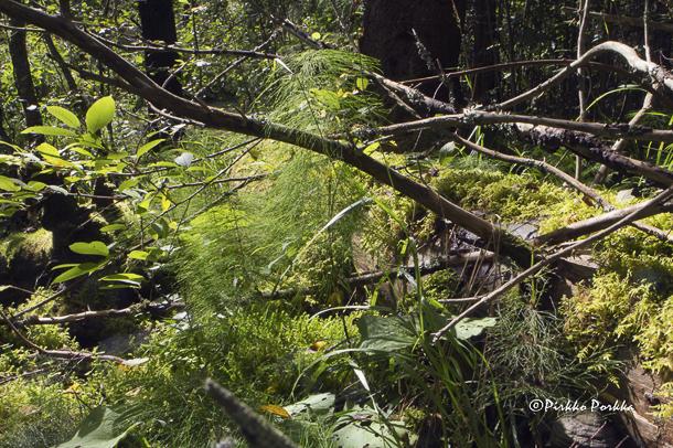 Pirkko Porkan valokuva Voimaannuttava luonto -näyttelyssä Athos-Säätiön päärakennuksessa Lammilla. Kuva: Pirkko Porkka