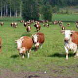 Välitä viljelijästä -projektilla tukea maatalousyrittäjien jaksamiseen