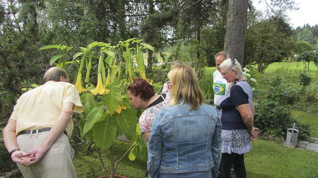 Avoimet puutarhat -tapahtumaan toivotaan osallistumaan erilaisia puutarhoja.