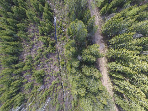 Metsää kuvattuna dronesta. Kuva: Esa Lientola