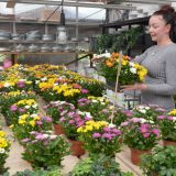 Luonnollisuus on valttia kukka-asetelmissakin